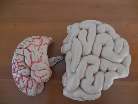 The Mind Brain & The Second Brain (and how one massage practice can relieve both)